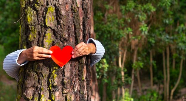 Replantons les arbres que nous avons coupés